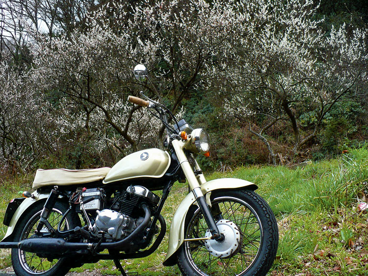 ume (plum) grove &  My CD125T HONDA